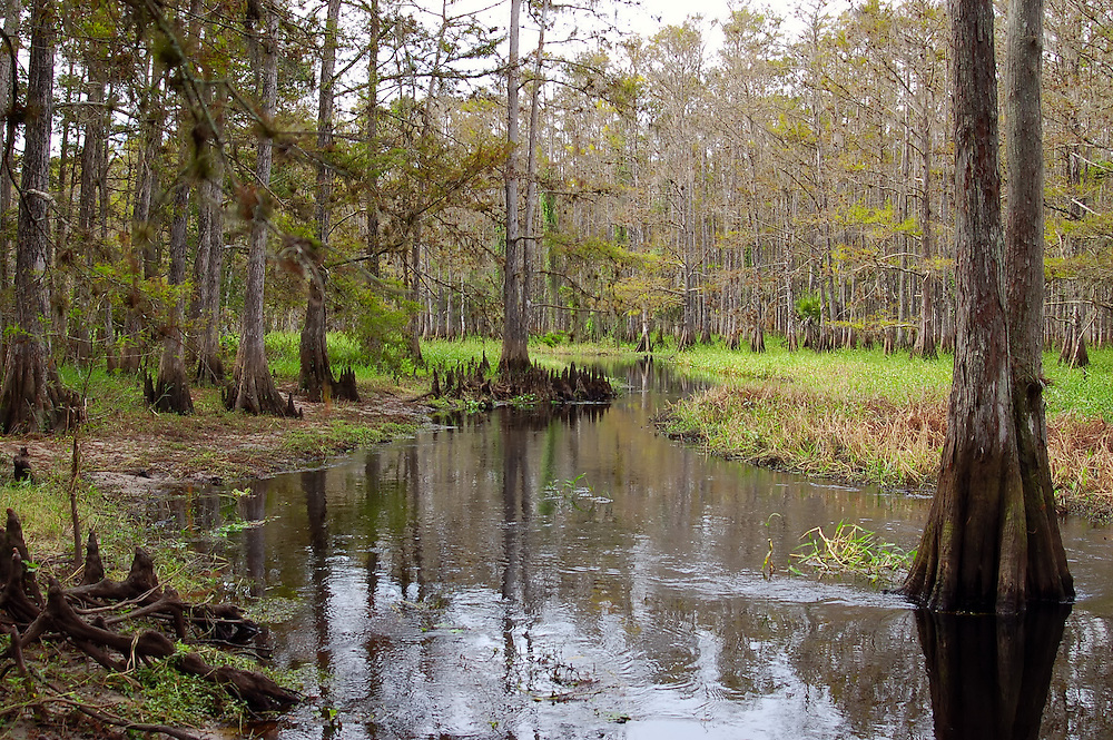 One of the best natural areas in all of Florida - Fisheating Creek. Completely rural with no signs of modern life - this is our favorite canoe trip for stepping back into time!