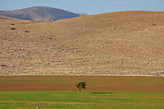 Lone tree in an agricultural field in Central Jordan Valley. The Jordan Rift Valley, also Jordan Valley also called the Syro-African Depression, is an elongated depression located in modern-day Israel, Jordan, and Palestine. This geographic region includes the entire length of the Jordan River – from its sources, through the Hula Valley, the Korazim block, the Sea of Galilee, the (Lower) Jordan Valley, all the way to the Dead Sea,