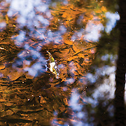 Water, light and reflection