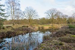 Zonneheide, Hilversum, Noord Holland, Netherlands