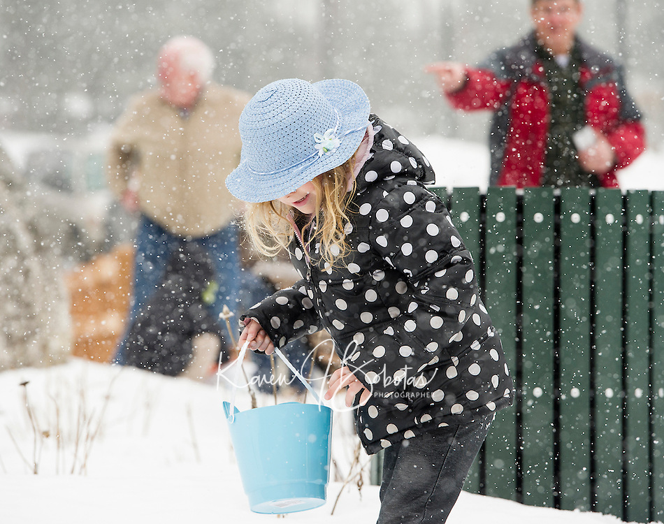 """With a touch of """"Easter Egg Blue"""" in his bonnet Destiny Elliott searches for eggs in the snow during the Weirs Community Park Easter Egg Hunt Saturday morning.  (Karen Bobotas/for the Laconia Daily Sun)"""