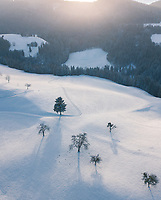 Aerial View of Snowy Mountains with trees and birds in Kanton Zürich, Switzerland