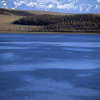 MONGOLIA, Darhad Valley.  Yaks and cattle graze by Dood Nuur Lake.  Horidol Saridog Mts. bkg.