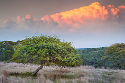 Clouds and tree at sunset, Hill Country between Blanco and Fredericksburg, Texas, USA