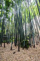 "Hokoku-ji Bamboo Garden - Hokoku-ji Kamakura is world famous for its bamboo garden containing more than 2000 Moso bamboos trees. Its nickname is Take-dera ""Bamboo Temple"" for that reason.  The bamboo garden is punctuated with stone lanterns, jizo and moss covered stones.  Besides the popular bamboo garden, and teahouse, Hokokuji also has a often overlooked Zen garden   Ashikaga Ietoki, ordered Zen priest Tengan Eko to establish Hokoku-ji. This temple became the family temple of the Ashikaga clan. Tengan was a disciple of Mugaku Sogen a contemporary of famous garden designer Muso Kokushi."