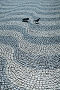 Pair of feral pigeons strolling across paviers of wavy lines and geometric patterns in Rossio Square in the City of Lisbon, Portugal