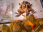07 MARCH 2014 - MAE SOT, TAK, THAILAND: Frogs, grilled (top) and alive, in the market in Mae Sot.     PHOTO BY JACK KURTZ