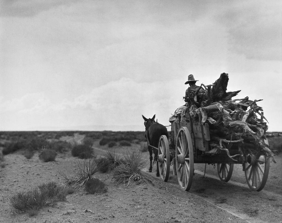 Navajo Indian collecting cedar for fire wood, Arizona, USA, 1926