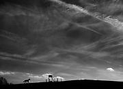 Ridge View, Patapsco Horse Farm in Oella, Maryland.