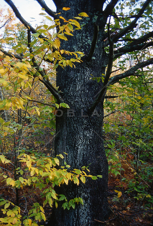 Tree trunk surrounded by small trees in autumn