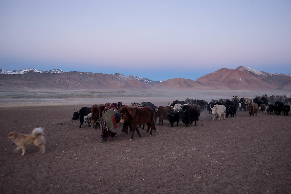 Rusphu nomads begin a journey in the early morning hours as they move pastures from a major settlement in Thukje to a smaller settlement for the winter on the lake's Southwestern shores.