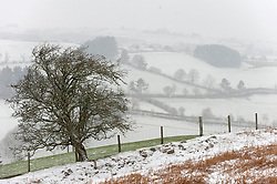 © Licensed to London News Pictures. 31/01/2021. Builth Wells, Powys, Wales, UK. Bitterly cold weather on the Mynydd Epynt range near Builth Wells in Powys, Wales, UK. Photo credit: Graham M. Lawrence/LNP