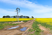 Windmill in a field of canola crop, next to a dirt track in Inverleigh, Victoria, Australia. <br /> <br /> Editions:- Open Edition Print / Stock Image