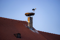 THEMENBILD - Die Freistadt Rust am Neusiedlersee wird auch Hauptstadt der Stoerche genannt. Der Weissstorch (Ciconia ciconia) zaehlt zu den groessten Landvoegeln Europas. Das Federkleid ist bis auf die schwarzen Schwungfedern rein weiss. Schnabel und Staender sind rot. Hier im Bild ein Weissstorch in seinem Nest am Kamin eines Ruster Wohnhauses am Dienstag 15. September 2020 in Rust // The free city of Rust on Lake Neusiedl is also called the capital of the storks. The white stork (Ciconia ciconia) is one of the largest land birds in Europe. The plumage is pure white except for the black flight feathers. Beak and pennants are red. Here in the picture a white stork in its nest on the chimney of a house in Rust on Tuesday 15 September 2020. EXPA Pictures © 2020, PhotoCredit: EXPA/ Johann Groder