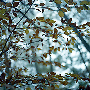 Winter Leaves, Thornham Walks, Suffolk, 2010