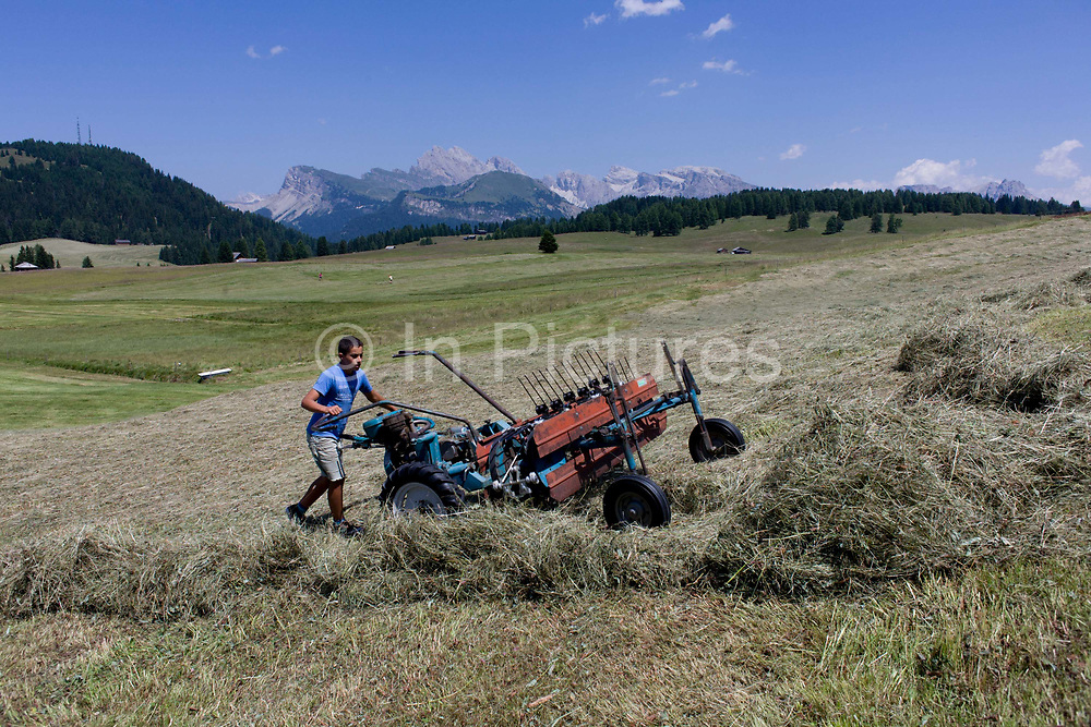 Young boy manhandles haymaking machine on the Alpe di Siusi (German: Seiser Alm) plateau, above the South Tyrolean town of Ortisei-Sankt Ulrich in the Dolomites, Italy. The youngster helps his family bring in the hay using machinery but also hand rakes. The Alpe di Siusi is the biggest high-alpine pasture in Europe with a surface of 57 km² and its altitude range from 1680 to 2350 m above sea level. This high-alpine pasture is located in the heart of the Dolomites. A mostly older generation of farmers work the land in this high area, known for its summer hiking trails and skiing pistes.