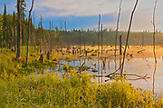 Wetland at sunrise on Kendall Inlet of Lake of The Woods<br />