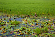 A man stands chest deep in water fishing on the edge of a paddy field on the 2nd of October 2018 in Satkhira District, Bangladesh. Satkhira is a district in southwestern Bangladesh and is part of Khulna Division. It lies along the border with West Bengal, India. It is on the bank of the Arpangachhia River. (photo by Andrew Aitchison / In pictures via Getty Images)