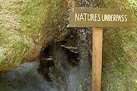Nature's Underpass Tourism Attraction at The Trees of Mystery, Klamath, California