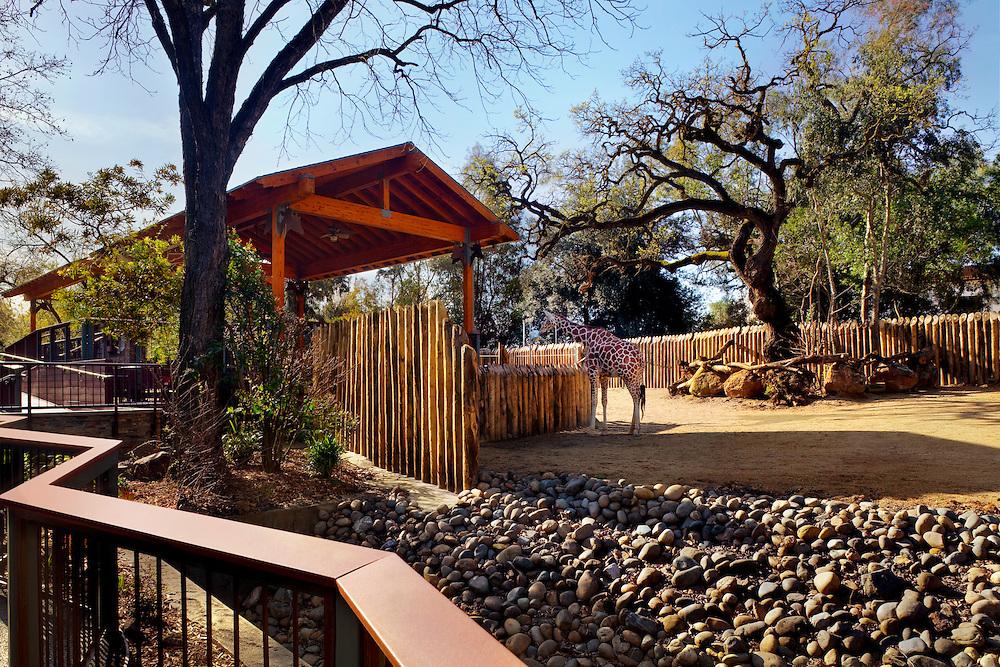Giraffe Exhibit & Barn Photographed for Nacht & Lewis Architects, Otto Construction, & the Sacramento Zoo.