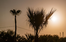 THEMENBILD - Palmen im Gegenlicht bei Sonnenaufgang an einem heissen Sommertag, aufgenommen am 17. August 2018 in Larnaka, Zypern // Palm trees in backlight at sunrise on a hot summer Day, Larnaca, Cyprus on 2018/08/17. EXPA Pictures © 2018, PhotoCredit: EXPA/ JFK