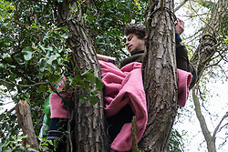 Harefield, UK. 27th April 2019. An environmental activist from Colne Valley Action sits in a tree to prevent its felling as part of work scheduled for this weekend for the HS2 project. The Colne Valley is an area of natural beauty and large areas of trees have been felled there for HS2 in recent weeks. Protesters based at the Harvil Road Wildlife Protection Camp are seeking to prevent further destruction.