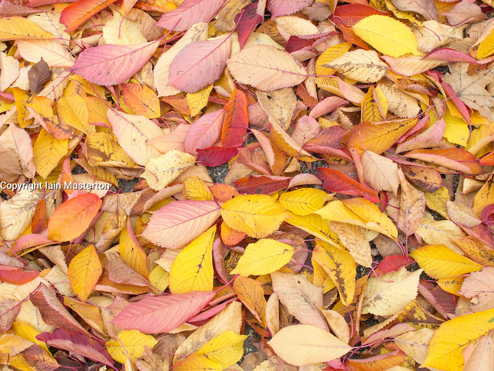 Yellow and red leaves on ground in the Autumn