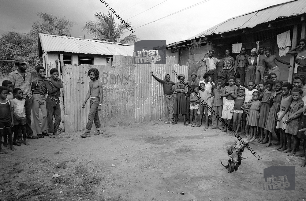 Trenchtown Cock Fight