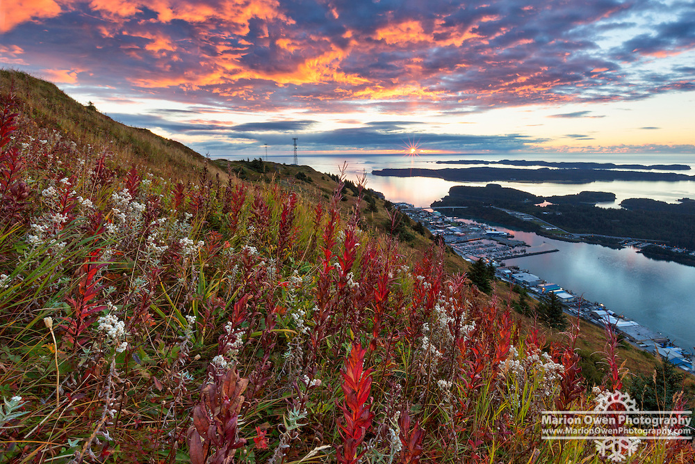 Sunrise creates day-glo pink clouds over Kodiak, Alaska with fall fireweed colors in foreground.