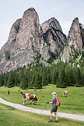 Cows, hiker, Vallunga/Langental valley, Puez-Geisler Nature Park, Val Gardena, Dolomites, South Tyrol, Italy, Europe. The beautiful ski resort of Selva di Val Gardena (German: Wolkenstein in Gröden; Ladin: Sëlva Gherdëine) makes a great hiking base in the Dolomites, in the South Tyrol region (Trentino-Alto Adige/Südtirol). For our favorite hike in the Dolomiti, start from Selva with the first morning bus to Ortisei, take the Seceda lift, admire great views up at the cross on the edge of Val di Funes (Villnöss), then walk 12 miles (2000 feet up, 5000 feet down) via the steep pass Furcela Forces De Sieles (Forcella Forces de Sielles) to beautiful Vallunga (trail #2 to 16), finishing where you started in Selva. The hike traverses the Geisler/Odle and Puez Groups from verdant pastures to alpine wonders, all preserved in a vast Nature Park: Parco Naturale Puez-Odle (German: Naturpark Puez-Geisler; Ladin: Parch Natural Pöz-Odles). UNESCO honored the Dolomites as a natural World Heritage Site in 2009.