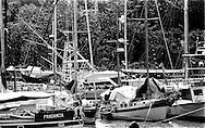 Sailboats parked at the Miraflores Lake at the Panama Canal.