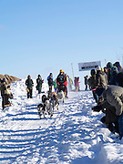Linus Meyer of Melrose, MN sets off on his ten-dog class sled race on Sunday, 2 Feb 2014. Scenes from the Apostle Islands Sled Dog Race, hosted by the Bayfield Chamber of Commerce, near Bayfield, WI