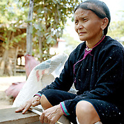 A Lanten ethnic minority woman rolling cotton, Ban Nam Dee, Luang Namtha province, Lao PDR. The Lanten or Yao Mun are a small but distinctive group of the Yao ethnic minority residing in northern Laos, Vietnam and China.  Maintaining a strong cultural identity, they are easily recognised by their hand woven, indigo dyed attire. Unlike many other ethnic groups who have relinquished their traditional dress, each Mun family still cultivates cotton and indigo for spinning, weaving, dyeing and sewing into clothing. One of the most ethnically diverse countries in Southeast Asia, Laos has 49 officially recognised ethnic groups although there are many more self-identified and sub groups. These groups are distinguished by their own customs, beliefs and rituals.