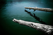 Weathered logs on the Delaware River near Lambertville, New Jersey