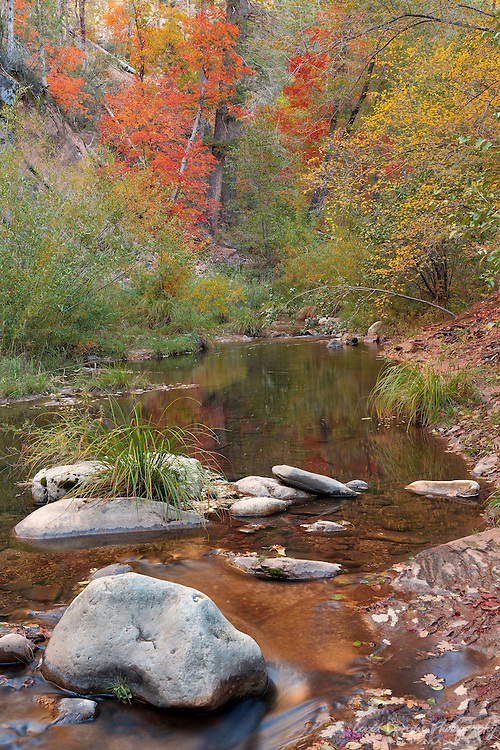 Autumn colors reflect in the gentle flow of Oak Creek's West Fork.