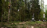 30.05.2017 Puszcza Bialowieska Aktywisci z Greenpeace i Fundacji Dzika Polska zablokowali wycinke drzew w nadl. Browsk przy uzyciu harvestera - ciezkiej i wydajnej maszyny mogacej wyciac w ciagu dnia setki drzew . Ciezkie maszyny do wyrebu i zaladunku drzew zostaly otoczone przez aktywistow . Osiem osob przypielo sie do harvestera . Miejsce protestu jest obszrem legowym dzieciola trojpalczastego i soweczki N/z aktywisci na drzewach fot Michal Kosc / AGENCJA WSCHOD