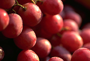 Close up selective focus photograph of Red Globe Grapes in the sunlight