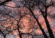 Abstracted tree branches against a vivid sunset sky in Auburn, California