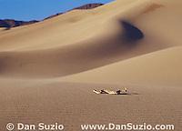 Mojave desert sidewinder, Crotalus cerastes cerastes, Death Valley National Park, California