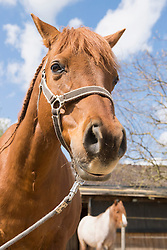 Close-up of horse in ranch, Bavaria, Germany