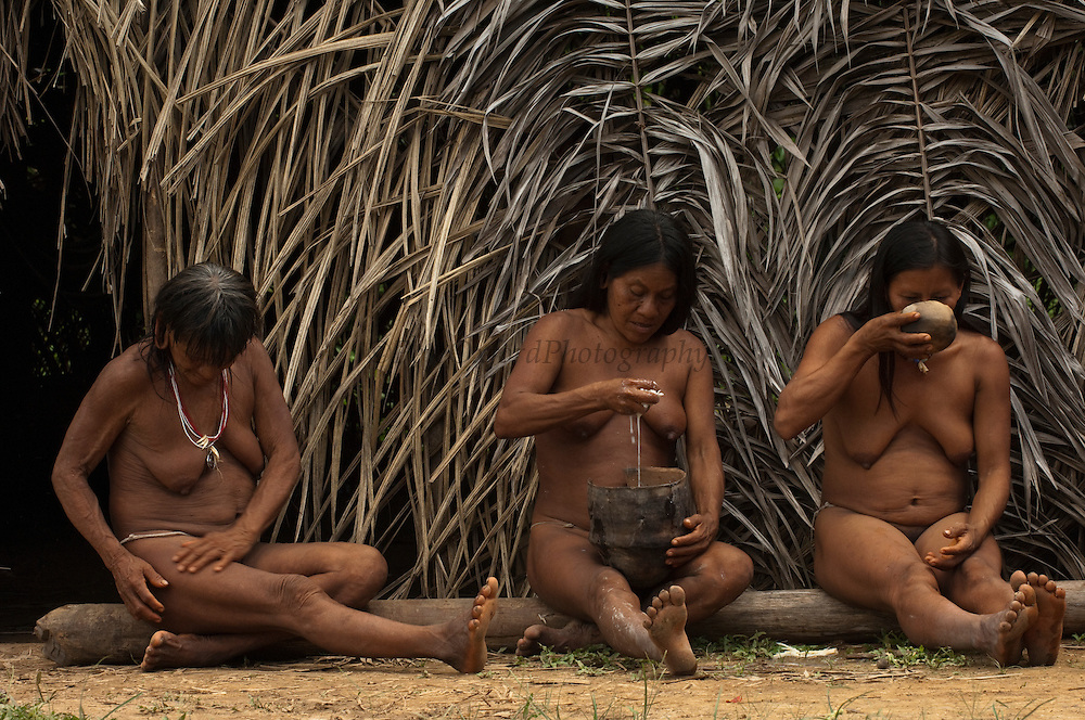 Huaorani women, Meñemo Bopoga, Awame Gomoke & Ewa Kemperi drinking chicha. This local brew is made from yuca. The woman chew it and then spit it into a bowl for fermenting. The alcohol content depends on the number of days it has been brewing.<br /> Bameno Community. Yasuni National Park.<br /> Amazon rainforest, ECUADOR.  South America<br /> This Indian tribe were basically uncontacted until 1956 when missionaries from the Summer Institute of Linguistics made contact with them. However there are still some groups from the tribe that remain uncontacted.  They are known as the Tagaeri & Taromenane. Traditionally these Indians were very hostile and killed many people who tried to enter into their territory. Their territory is in the Yasuni National Park which is now also being exploited for oil.