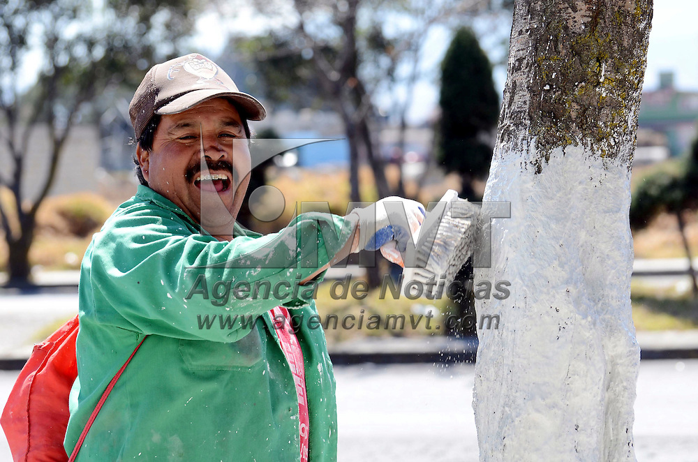 Zinacantepec, México.- Personal de obras públicas del municipio de Zinacantepec, realizan trabajos de encalado de los tallos de los arboles de la vialidad Adolfo López Mateos, para evitar que alguna plaga los enferme. Agencia MVT / José Hernández