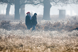 © Licensed to London News Pictures. 28/12/2016. London, UK.  A frosty start to the day in Bushy Park.  A very cold start to the day in some parts of the UK with temperatures well below freezing at dawn. Photo credit: Peter Macdiarmid/LNP