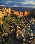 Pine tree & Cape Royal view South, North Rim, Grand Canyon National Park, Arizona..Subject photograph(s) are copyright Edward McCain. All rights are reserved except those specifically granted by Edward McCain in writing prior to publication...McCain Photography.211 S 4th Avenue.Tucson, AZ 85701-2103.(520) 623-1998.mobile: (520) 990-0999.fax: (520) 623-1190.http://www.mccainphoto.com.edward@mccainphoto.com