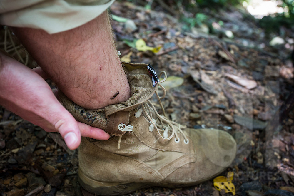 Leech on a trekker's leg during hike leading to Hang En Cave, Phong Nha-Ke Bang National Park, Quang Binh Province, Vietnam, Southeast Asia