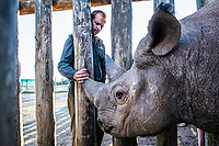 A black rhino stands in its boma alongside its caretaker. Empathy and compassion are absolute requirements for us all to be able to overcome this terrible scourge of wildlife crime that is decimating the iconic animals of Africa, including its rhino.