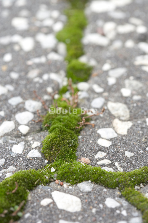 extreme close up moss growing between the cracks in asphalt pavement