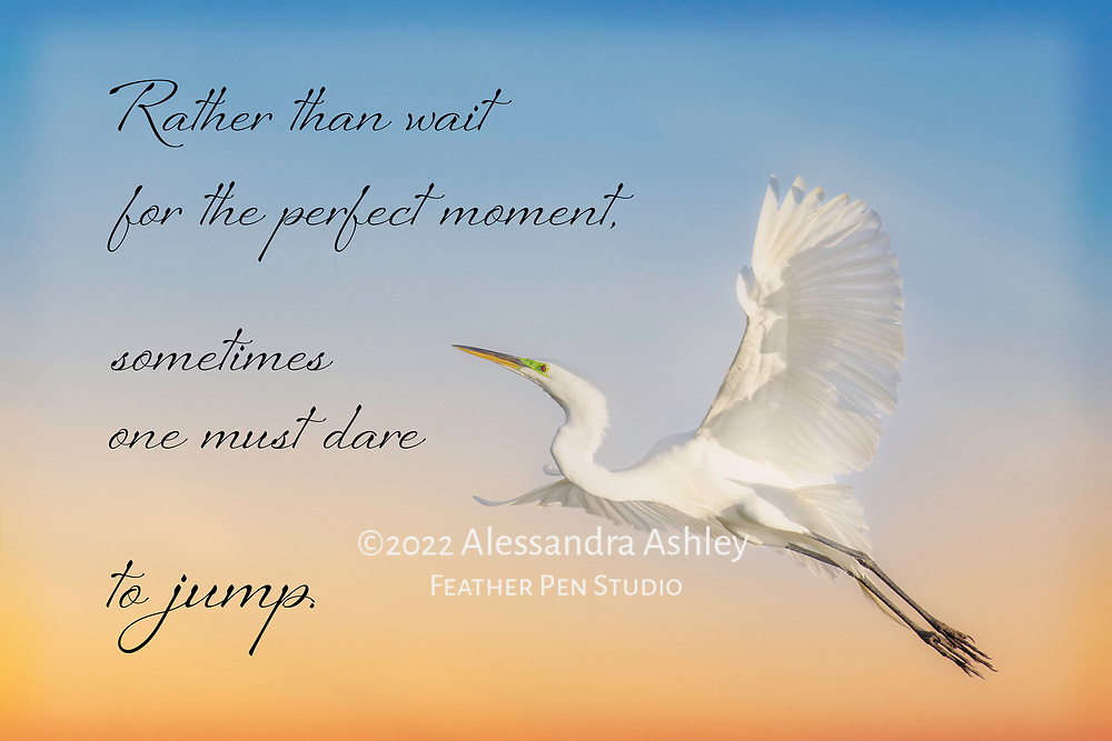 Great egret in flight. Paired with affirmation: Rather than wait for the perfect moment, sometimes one must dare to jump.
