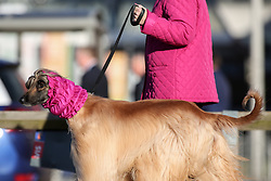 © Licensed to London News Pictures. 09/03/2017. Birmingham, UK. A woman wearing the same shade of pink as her dog arrives at the 126th annual Crufts dog show at the NEC in Birmingham, West Midlands. The show is organised by the Kennel Club and is the biggest of it's kind in the world.  Photo credit : Ian Hinchliffe/LNP