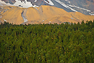 A coniferous forest in the Gifford Pinchot National Forest stands in the foreground against a backdrop of Mount Adams rock, snow, and Ice - Washington state, USA